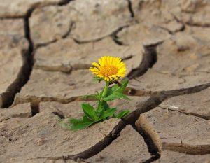 Kraften att leva -när kroppen inte fungerar som den ska