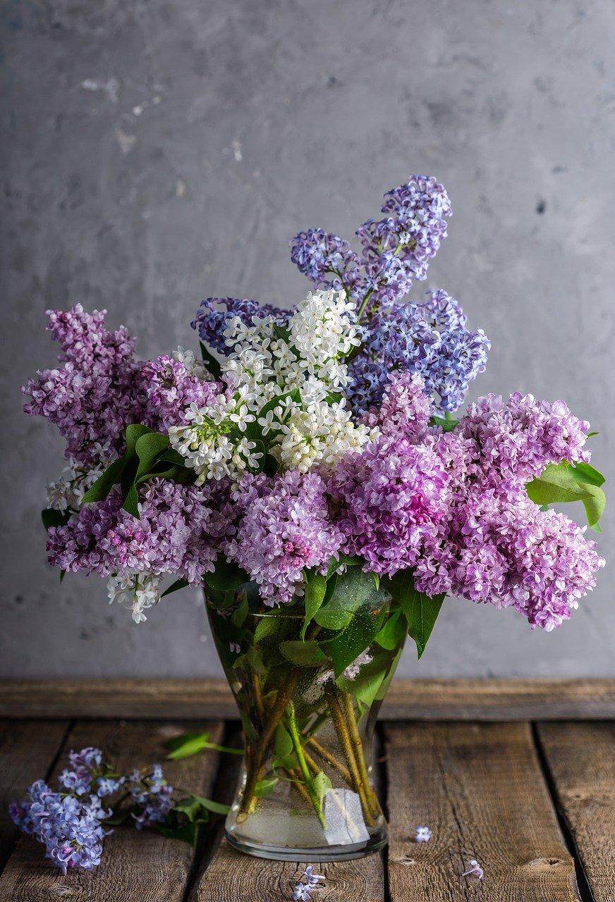 lilacs, bouquet, vase